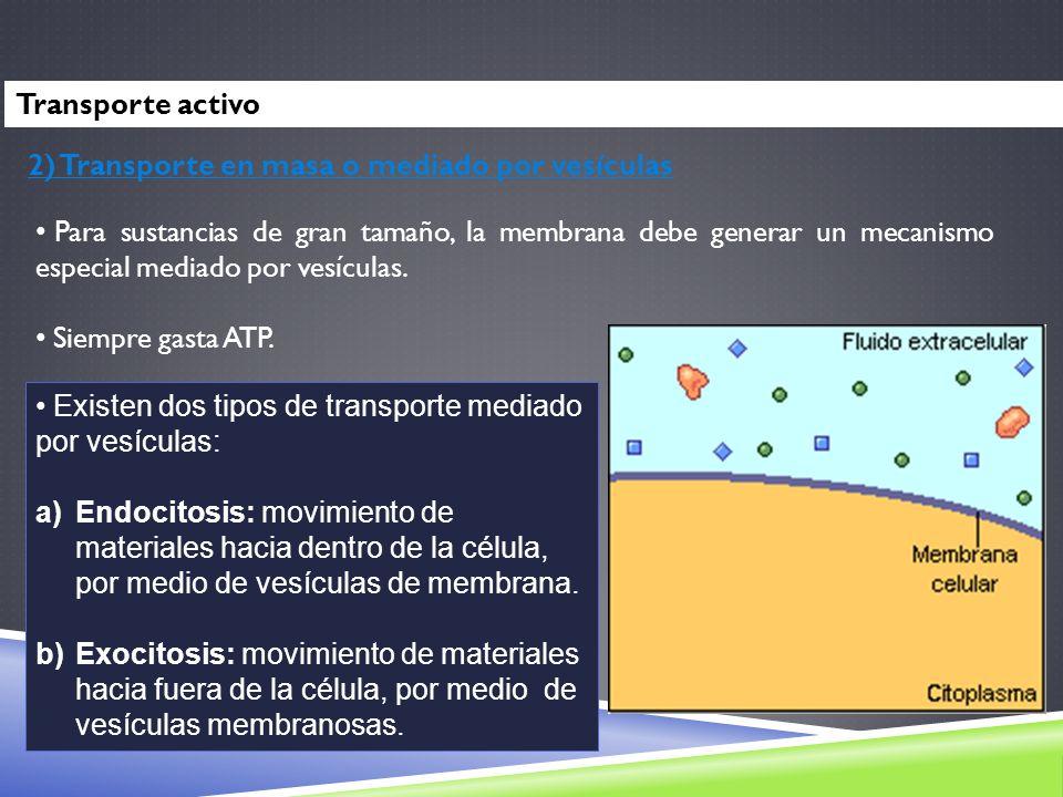 2) Transporte en masa o mediado por vesículas Existen dos tipos de transporte mediado por vesículas: a)Endocitosis: movimiento de materiales hacia den