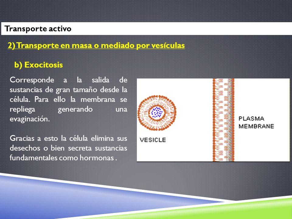 2) Transporte en masa o mediado por vesículas b) Exocitosis Corresponde a la salida de sustancias de gran tamaño desde la célula. Para ello la membran