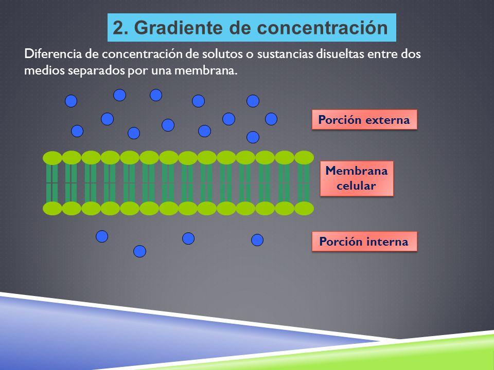 2. Gradiente de concentración Porción externa Membrana celular Membrana celular Porción interna Diferencia de concentración de solutos o sustancias di