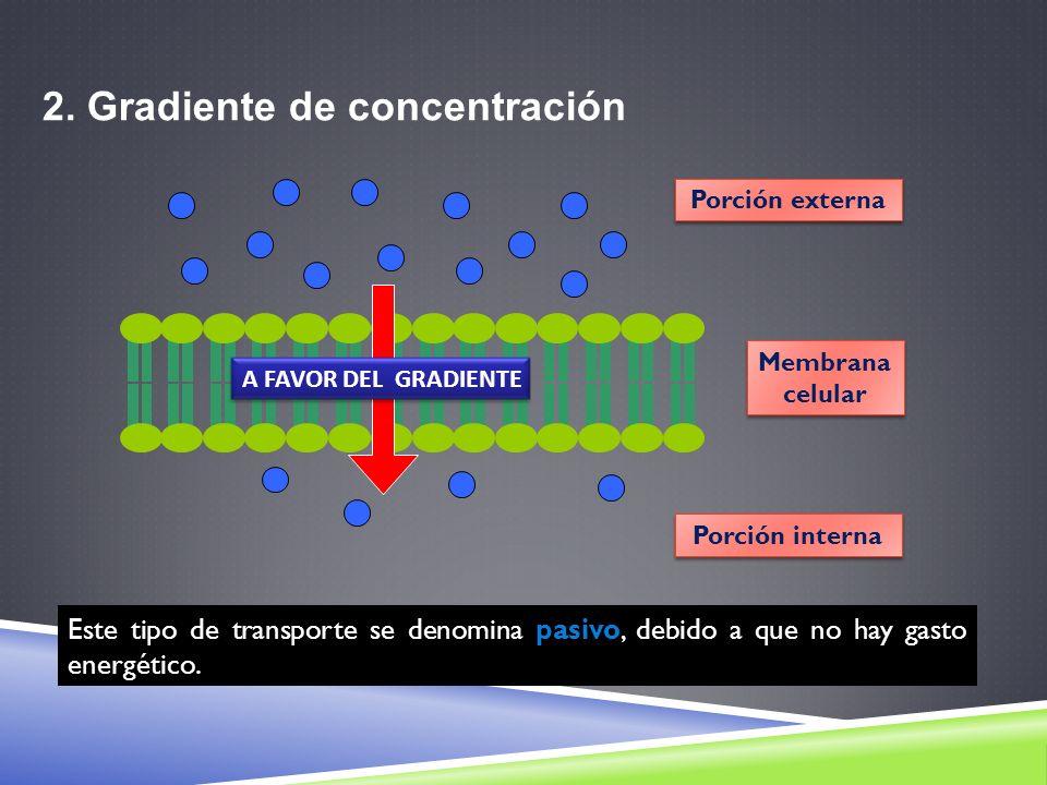 2. Gradiente de concentración Membrana celular Membrana celular Porción externa Porción interna A FAVOR DEL GRADIENTE Este tipo de transporte se denom