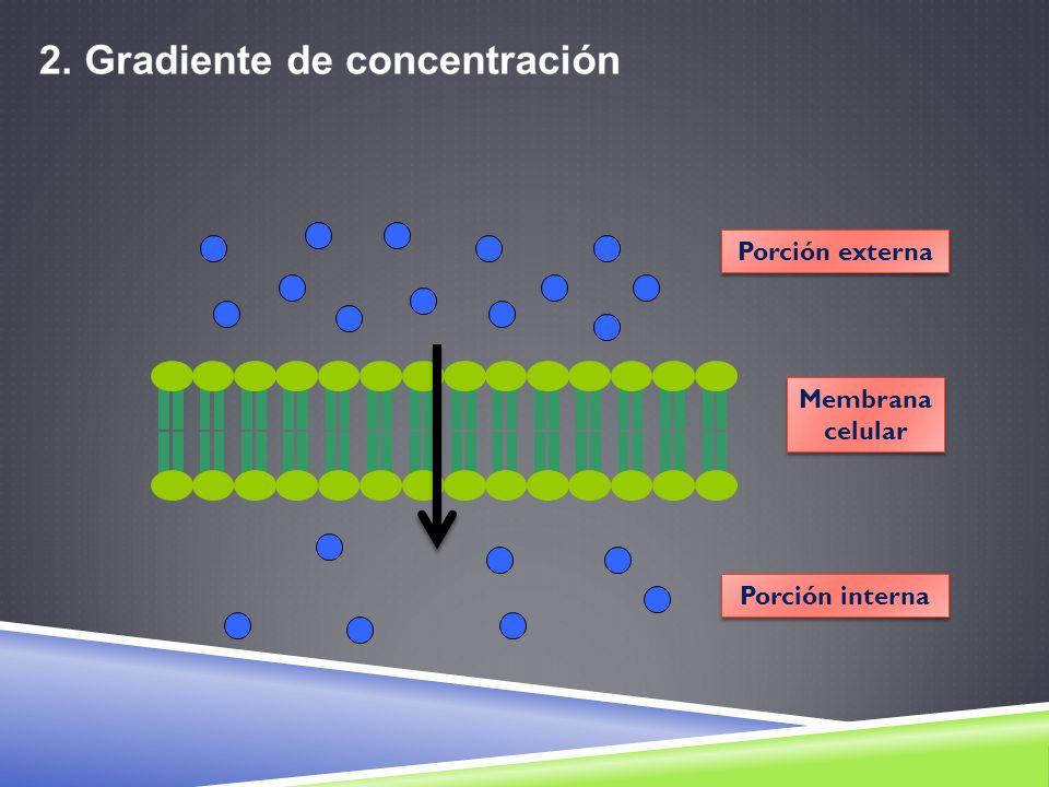 2) Transporte en masa o mediado por vesículas a) Endocitosis: Pinocitosis En la pinocitosis (significa, célula bebiendo), la célula, incorpora fluidos del medio externo, invaginando su membrana plasmática.