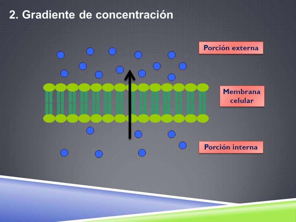 Membrana celular Membrana celular Porción externa Porción interna