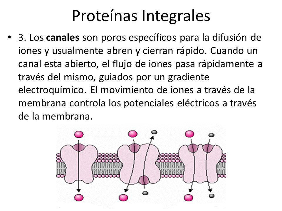 Electroporación La electroporación produce una transformación más eficiente que los métodos químicos.