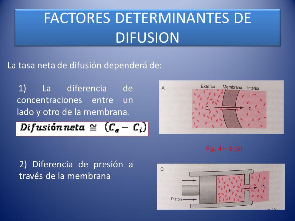 FACTORES DETERMINANTES DE DIFUSION La tasa neta de difusión dependerá de: 1) La diferencia de concentraciones entre un lado y otro de la membrana. 2)