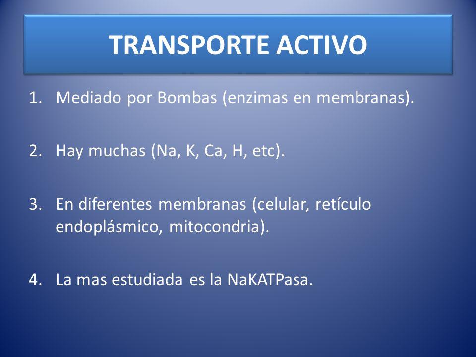 TRANSPORTE ACTIVO 1.Mediado por Bombas (enzimas en membranas). 2.Hay muchas (Na, K, Ca, H, etc). 3.En diferentes membranas (celular, retículo endoplás