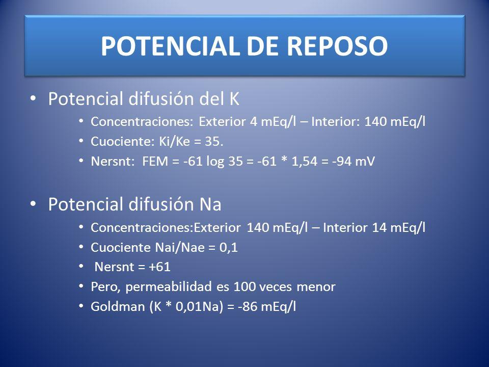 POTENCIAL DE REPOSO Potencial difusión del K Concentraciones: Exterior 4 mEq/l – Interior: 140 mEq/l Cuociente: Ki/Ke = 35. Nersnt: FEM = -61 log 35 =
