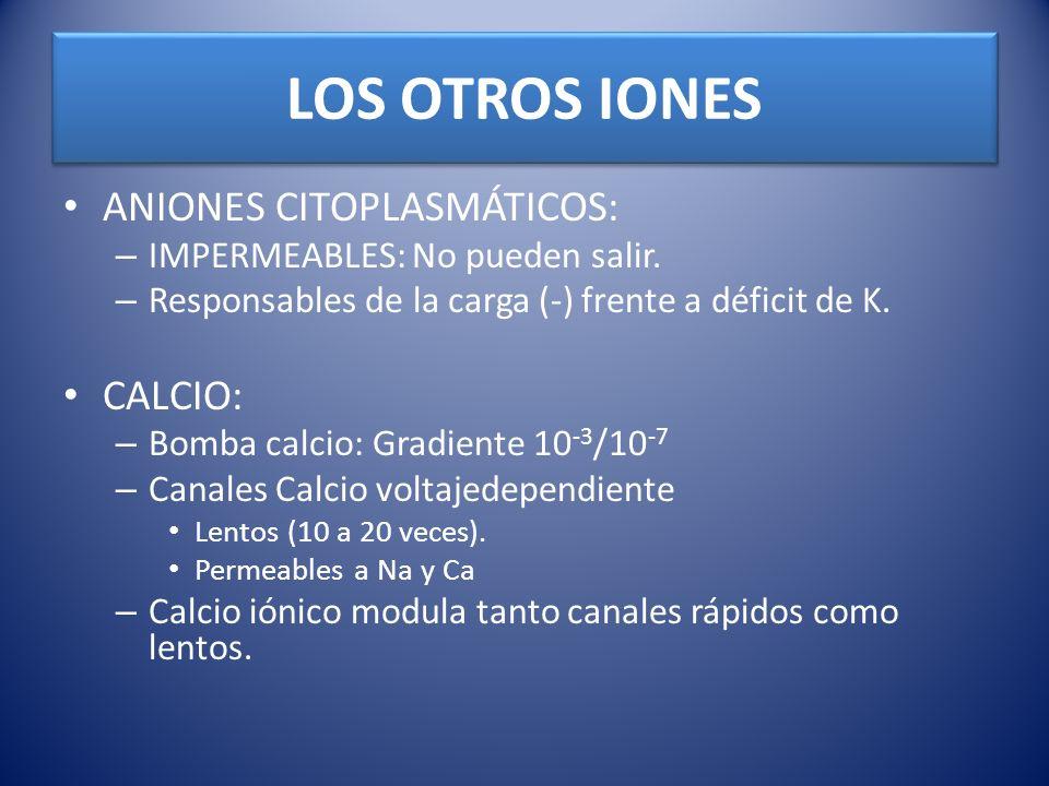 LOS OTROS IONES ANIONES CITOPLASMÁTICOS: – IMPERMEABLES: No pueden salir. – Responsables de la carga (-) frente a déficit de K. CALCIO: – Bomba calcio