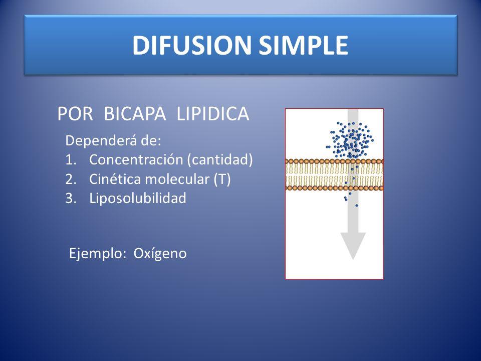 DIFUSION SIMPLE POR BICAPA LIPIDICA Dependerá de: 1.Concentración (cantidad) 2.Cinética molecular (T) 3.Liposolubilidad Ejemplo: Oxígeno