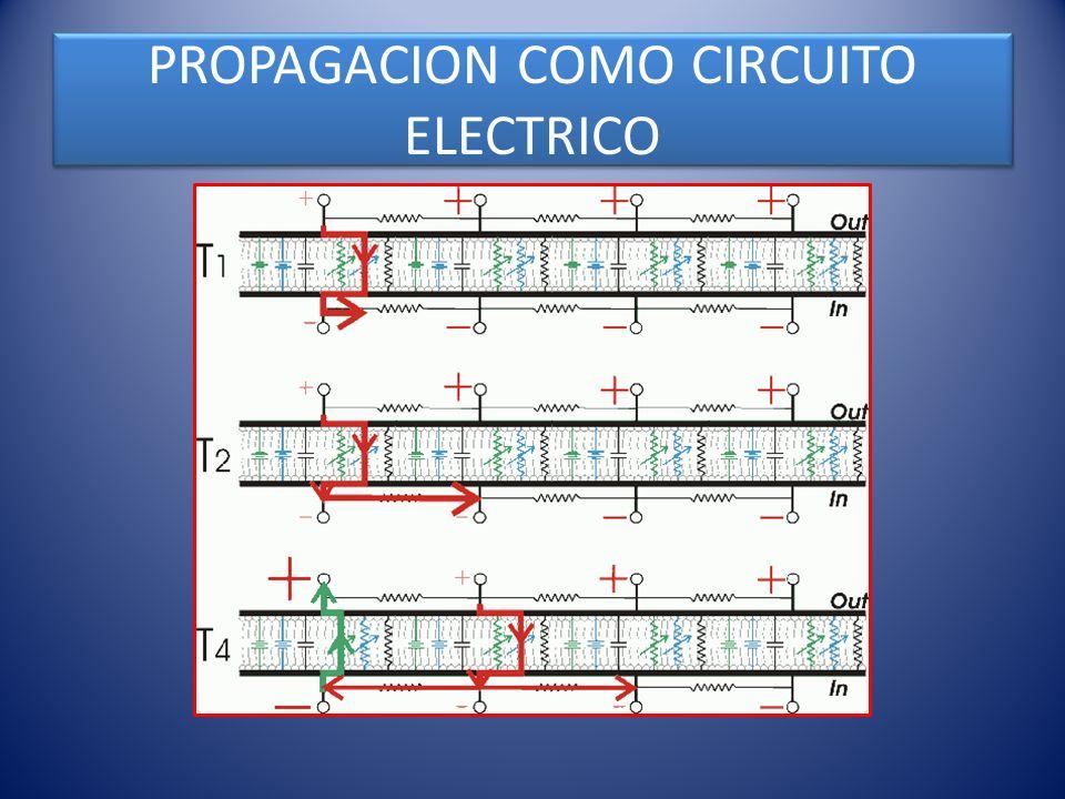 PROPAGACION COMO CIRCUITO ELECTRICO