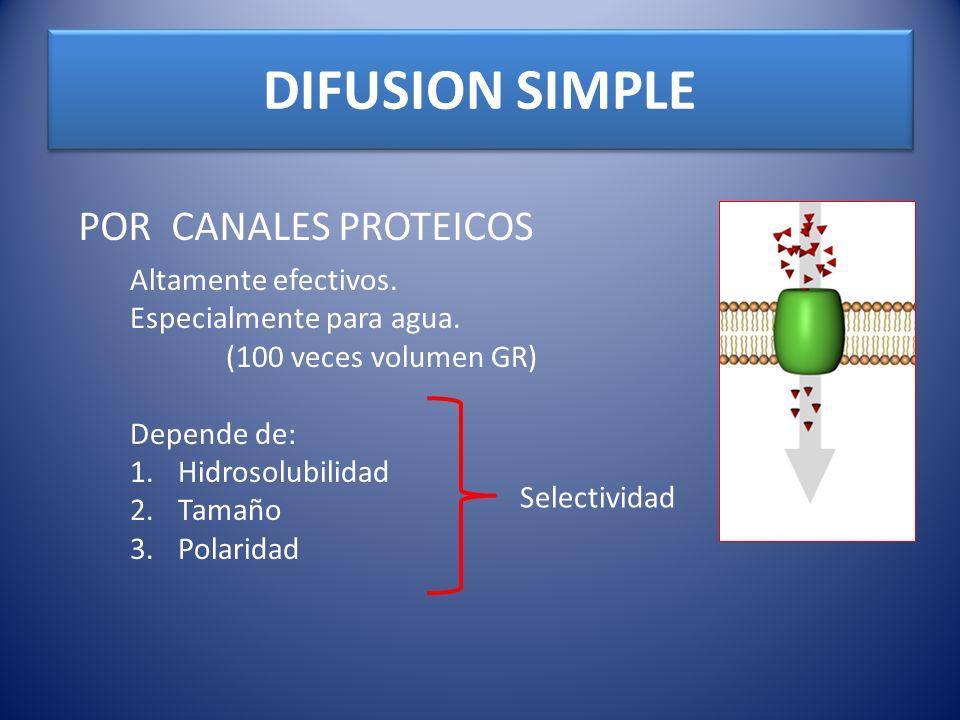 DIFUSION SIMPLE POR CANALES PROTEICOS Altamente efectivos. Especialmente para agua. (100 veces volumen GR) Depende de: 1.Hidrosolubilidad 2.Tamaño 3.P