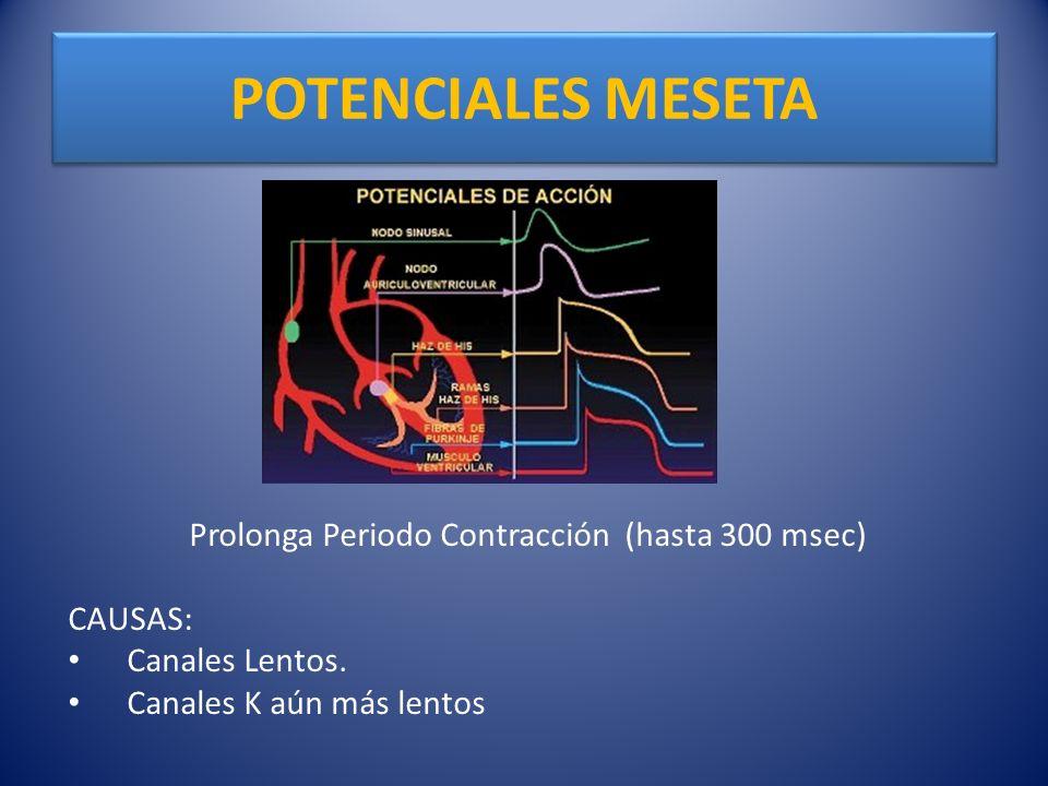 POTENCIALES MESETA Prolonga Periodo Contracción (hasta 300 msec) CAUSAS: Canales Lentos. Canales K aún más lentos