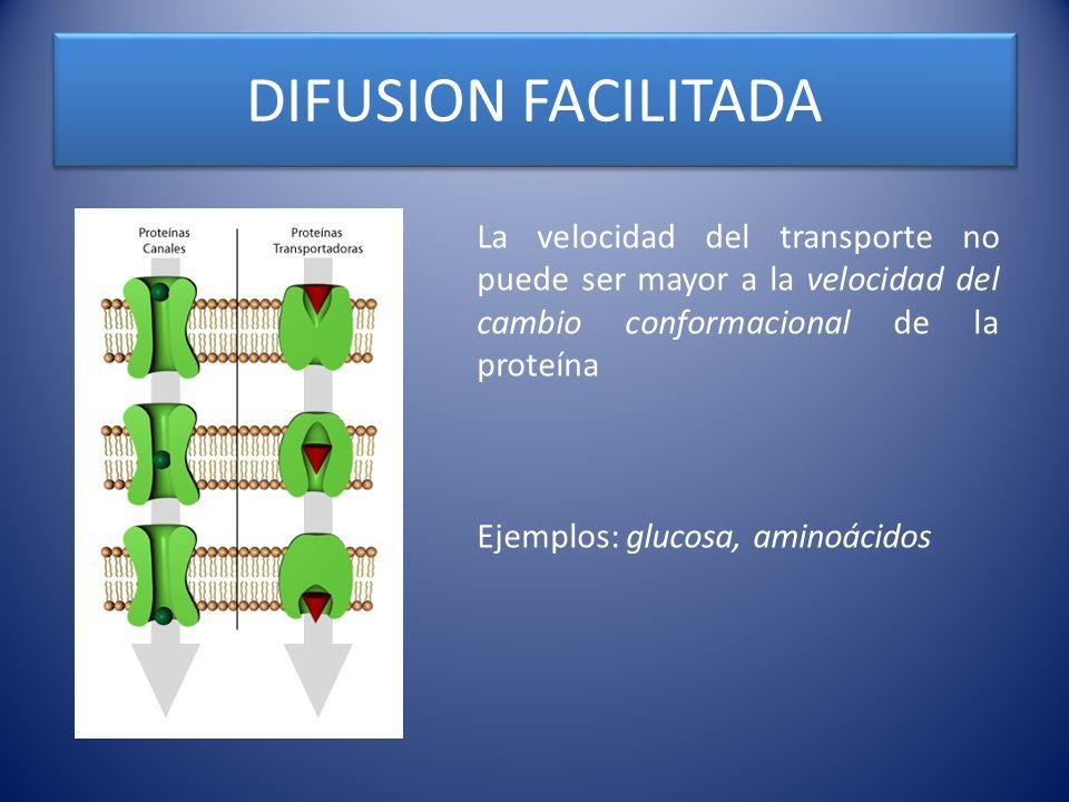 FACTORES DETERMINANTES DE DIFUSION La tasa neta de difusión dependerá de: 1) La diferencia de concentraciones entre un lado y otro de la membrana.