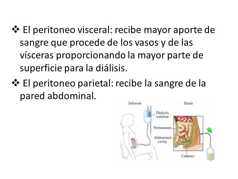 El peritoneo visceral: recibe mayor aporte de sangre que procede de los vasos y de las vísceras proporcionando la mayor parte de superficie para la diálisis.
