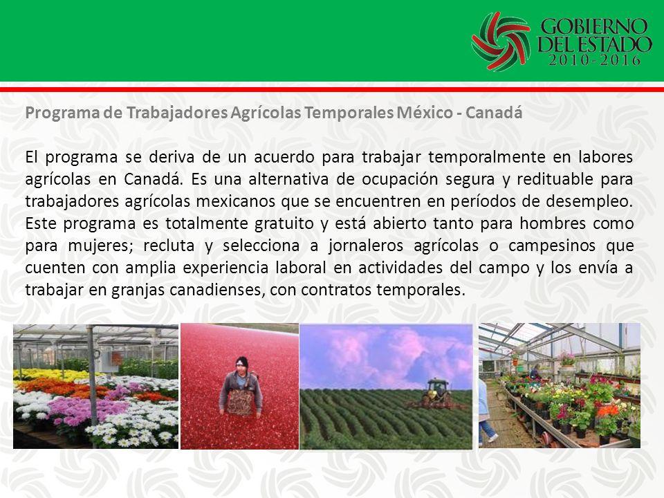 Programa de Trabajadores Agrícolas Temporales México - Canadá El programa se deriva de un acuerdo para trabajar temporalmente en labores agrícolas en Canadá.