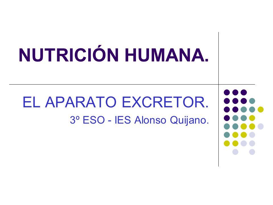 NUTRICIÓN HUMANA. EL APARATO EXCRETOR. 3º ESO - IES Alonso Quijano.