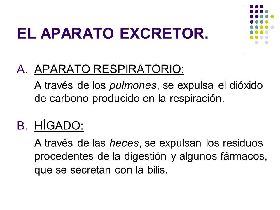 EL APARATO EXCRETOR. A.APARATO RESPIRATORIO: A través de los pulmones, se expulsa el dióxido de carbono producido en la respiración. B.HÍGADO: A travé