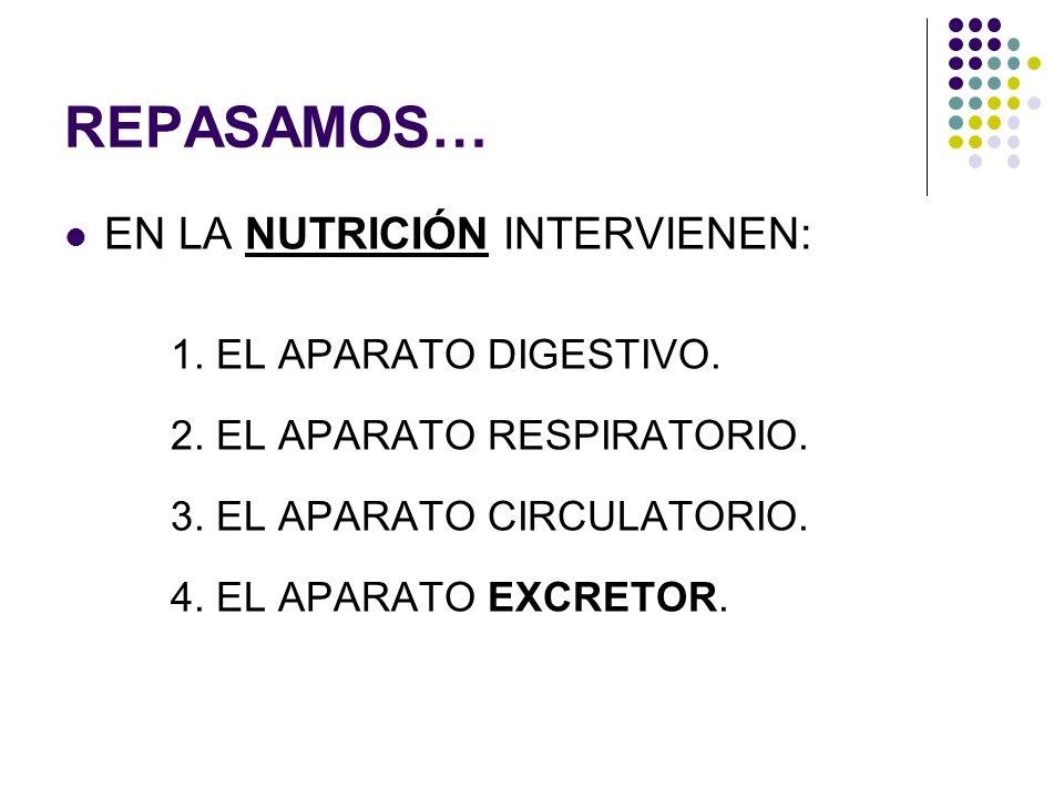 REPASAMOS… EN LA NUTRICIÓN INTERVIENEN: 1. EL APARATO DIGESTIVO. 2. EL APARATO RESPIRATORIO. 3. EL APARATO CIRCULATORIO. 4. EL APARATO EXCRETOR.