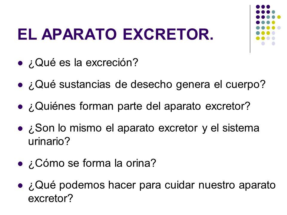 EL APARATO EXCRETOR. ¿Qué es la excreción? ¿Qué sustancias de desecho genera el cuerpo? ¿Quiénes forman parte del aparato excretor? ¿Son lo mismo el a