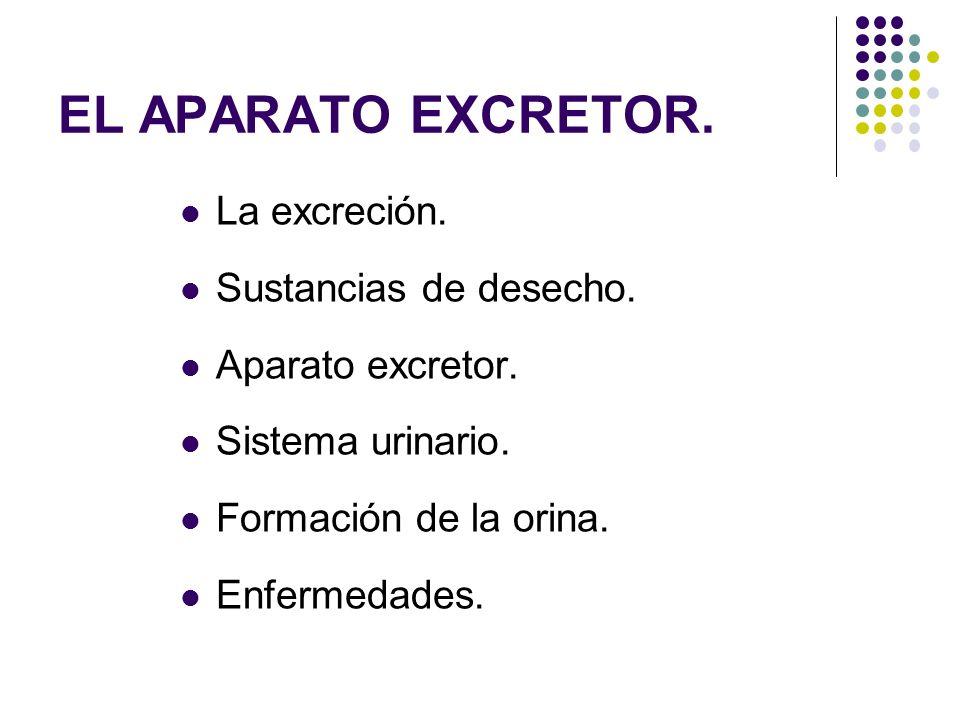 EL APARATO EXCRETOR. La excreción. Sustancias de desecho. Aparato excretor. Sistema urinario. Formación de la orina. Enfermedades.
