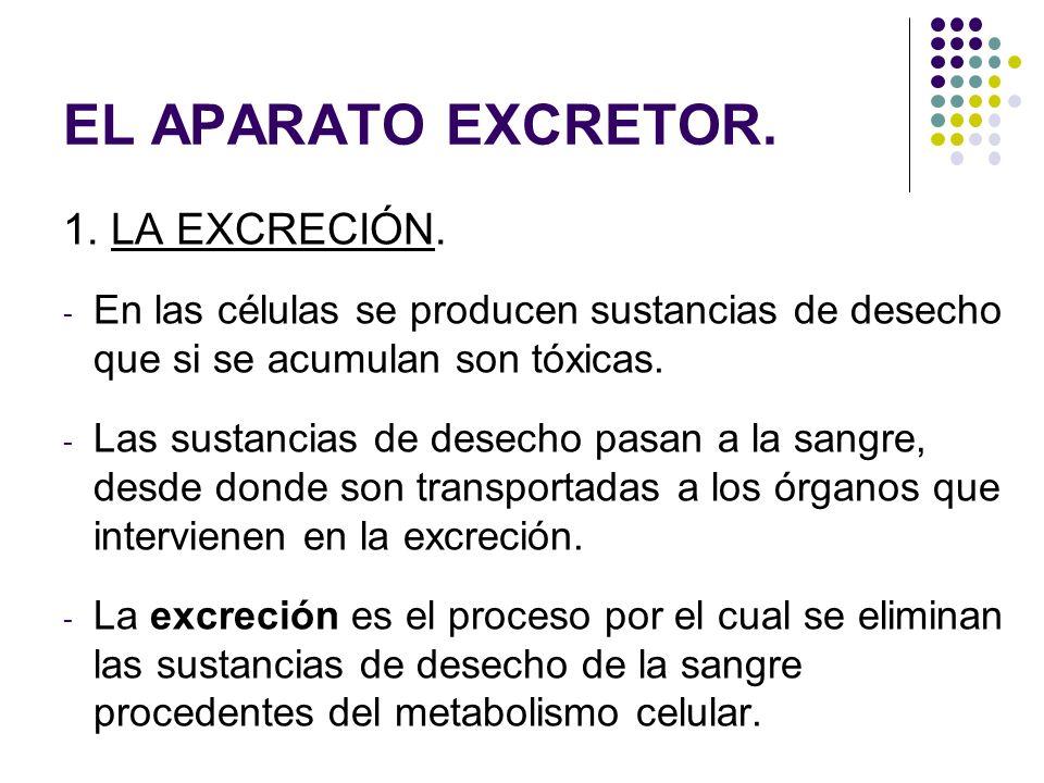EL APARATO EXCRETOR. 1. LA EXCRECIÓN. - En las células se producen sustancias de desecho que si se acumulan son tóxicas. - Las sustancias de desecho p