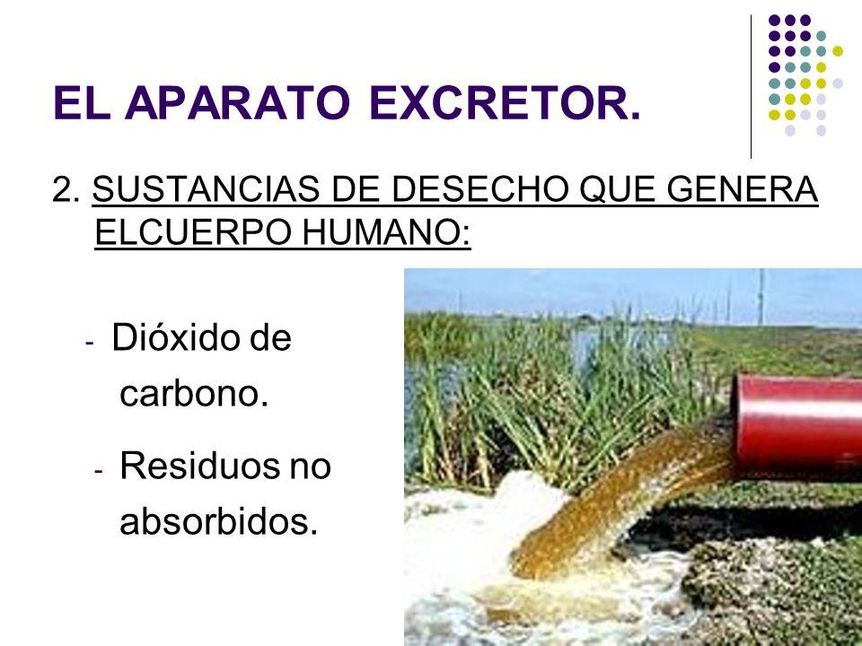 EL APARATO EXCRETOR. 2. SUSTANCIAS DE DESECHO QUE GENERA ELCUERPO HUMANO: - Dióxido de carbono. - Residuos no absorbidos.