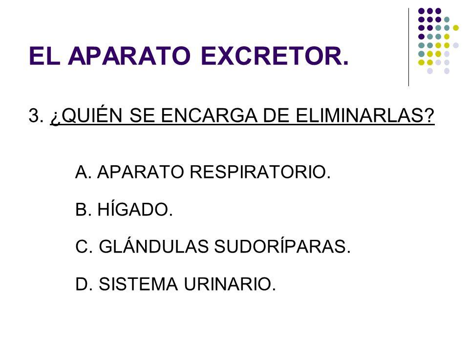 EL APARATO EXCRETOR. 3. ¿QUIÉN SE ENCARGA DE ELIMINARLAS? A. APARATO RESPIRATORIO. B. HÍGADO. C. GLÁNDULAS SUDORÍPARAS. D. SISTEMA URINARIO.