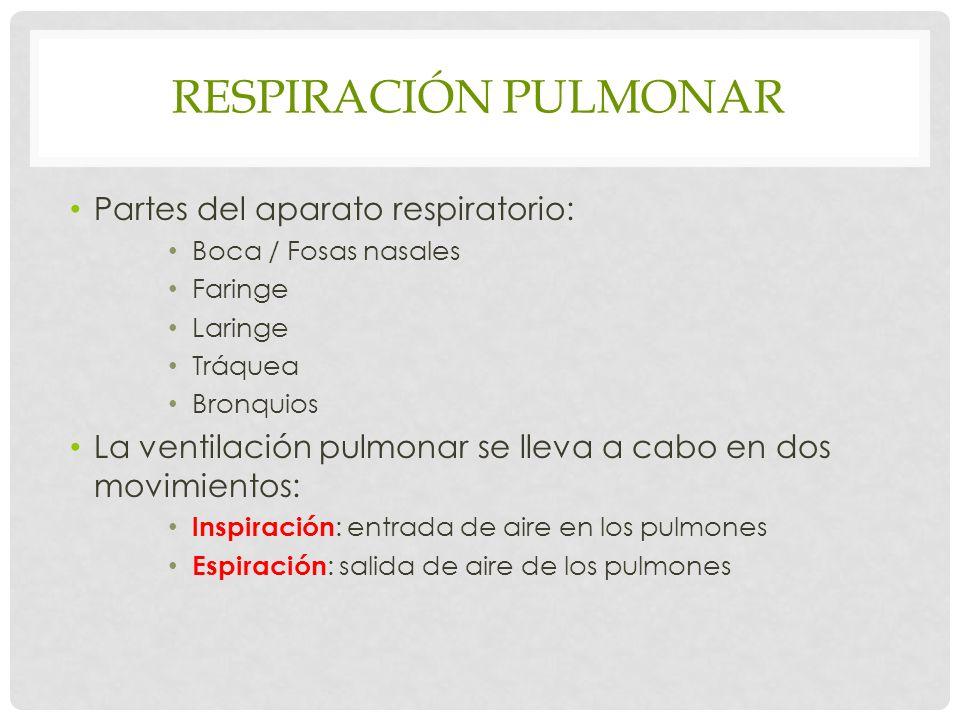 RESPIRACIÓN PULMONAR Partes del aparato respiratorio: Boca / Fosas nasales Faringe Laringe Tráquea Bronquios La ventilación pulmonar se lleva a cabo en dos movimientos: lnspiración : entrada de aire en los pulmones Espiración : salida de aire de los pulmones