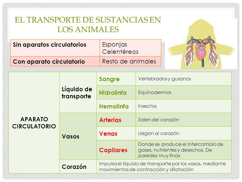 EL TRANSPORTE DE SUSTANCIAS EN LOS ANIMALES Sin aparatos circulatorios Esponjas Celentéreos Con aparato circulatorio Resto de animales APARATO CIRCULATORIO Líquido de transporte Sangre Vertebrados y gusanos Hidrolinfa Equinodermos Hemolinfa Insectos Vasos Arterias Salen del corazón Venas Llegan al corazón Capilares Donde se produce el intercambio de gases, nutrientes y desechos.