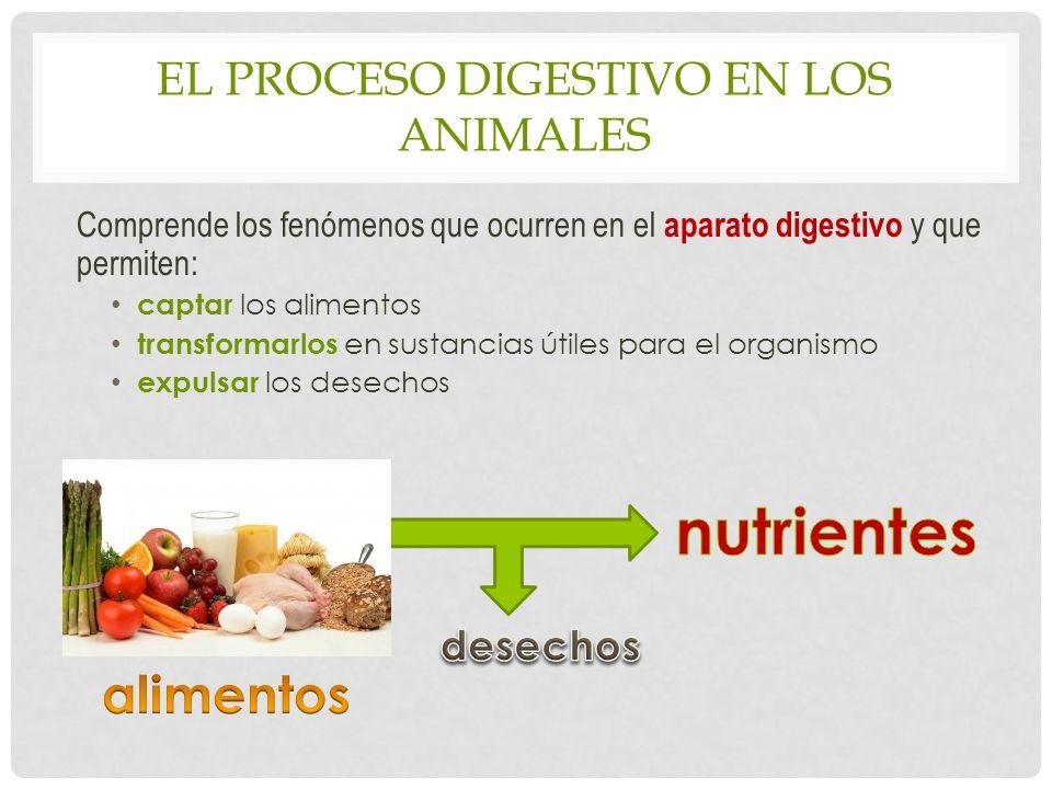EL PROCESO DIGESTIVO EN LOS ANIMALES Comprende los fenómenos que ocurren en el aparato digestivo y que permiten: captar los alimentos transformarlos en sustancias útiles para el organismo expulsar los desechos