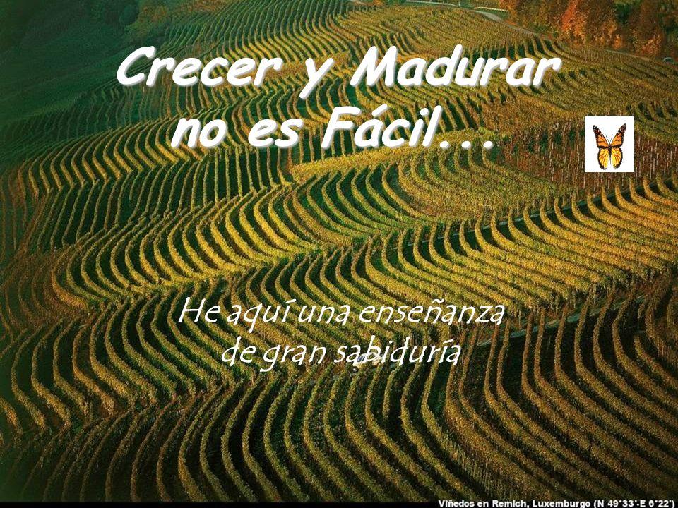 Crecer y Madurar no es Fácil... He aquí una enseñanza de gran sabiduría
