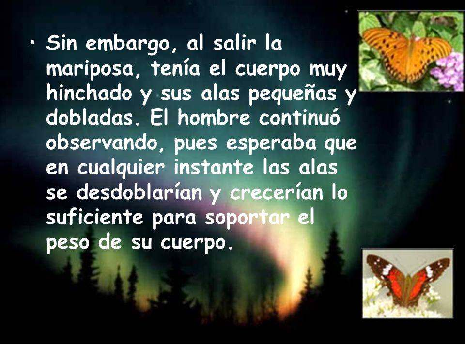 Sin embargo, al salir la mariposa, tenía el cuerpo muy hinchado y sus alas pequeñas y dobladas.