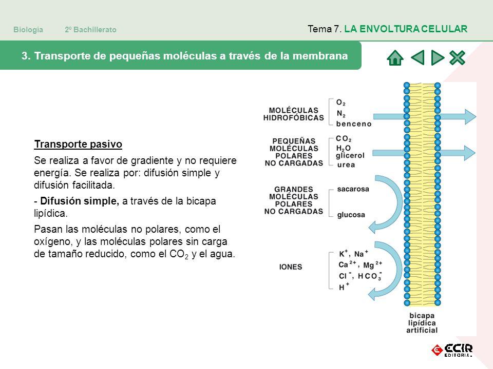Biología 2º Bachillerato Tema 7. LA ENVOLTURA CELULAR 3. Transporte de pequeñas moléculas a través de la membrana Transporte pasivo Se realiza a favor