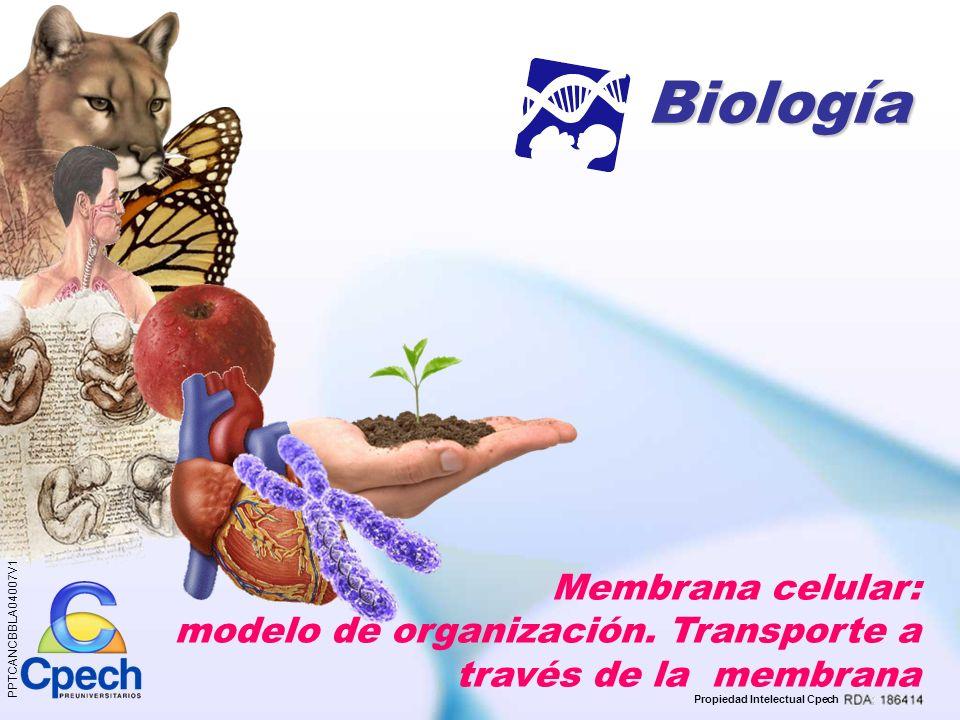 Propiedad Intelectual Cpech Membrana celular Organización Función: Transporte Bicapa de fosfolípidos Proteínas Pasivo Activo Difusión Osmosis Diálisis Carbohidratos Difusión simple Difusión facilitada Mediado por vesículas Mediado por proteínas carrier Síntesis de la clase