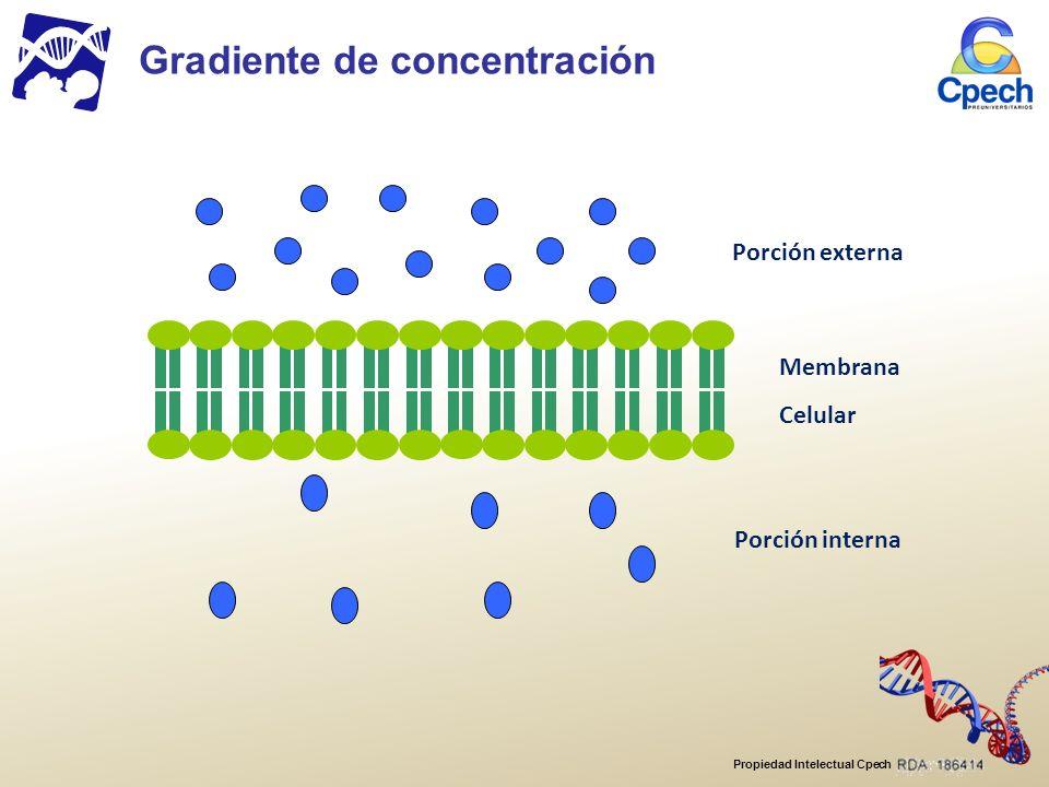 Propiedad Intelectual Cpech Membrana Celular Porción externa Porción interna Gradiente de concentración