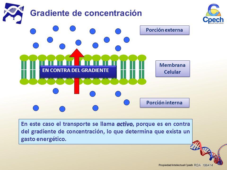 Propiedad Intelectual Cpech Membrana Celular Membrana Celular Porción externa Porción interna EN CONTRA DEL GRADIENTE Gradiente de concentración activo En este caso el transporte se llama activo, porque es en contra del gradiente de concentración, lo que determina que exista un gasto energético.