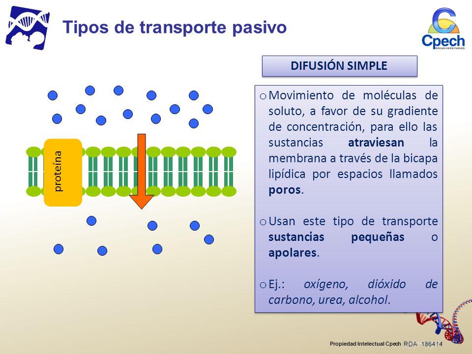 Propiedad Intelectual Cpech DIFUSIÓN SIMPLE proteína o Movimiento de moléculas de soluto, a favor de su gradiente de concentración, para ello las sustancias atraviesan la membrana a través de la bicapa lipídica por espacios llamados poros.