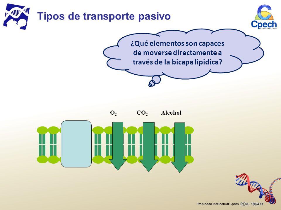 Propiedad Intelectual Cpech O2O2 CO 2 Alcohol ¿Qué elementos son capaces de moverse directamente a través de la bicapa lipidica.
