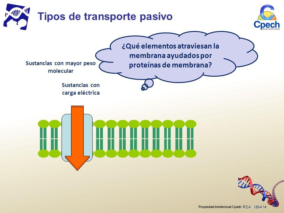Propiedad Intelectual Cpech Sustancias con carga eléctrica Sustancias con mayor peso molecular ¿Qué elementos atraviesan la membrana ayudados por proteínas de membrana.