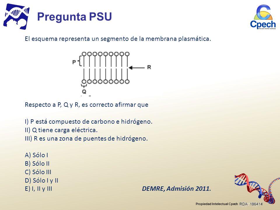 Propiedad Intelectual Cpech Una sustancia podrá atravesar directamente la bicapa de fosfolípidos si I.