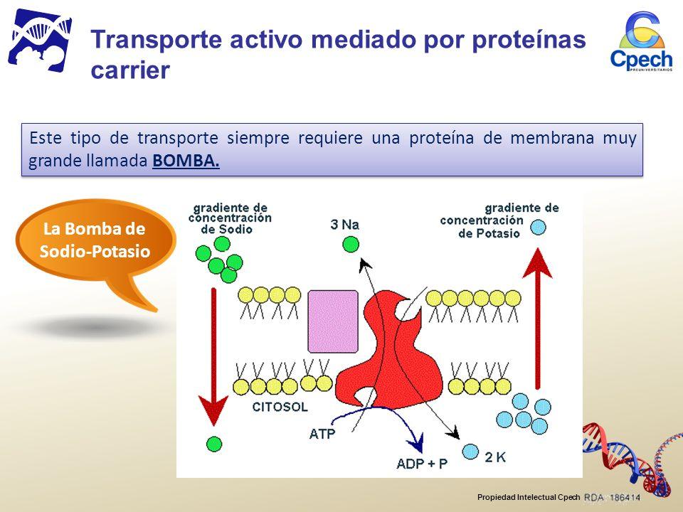Propiedad Intelectual Cpech Este tipo de transporte siempre requiere una proteína de membrana muy grande llamada BOMBA.