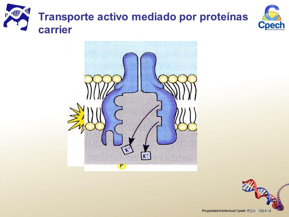 Propiedad Intelectual Cpech Transporte activo mediado por proteínas carrier