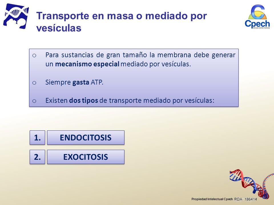 Propiedad Intelectual Cpech o Para sustancias de gran tamaño la membrana debe generar un mecanismo especial mediado por vesículas.