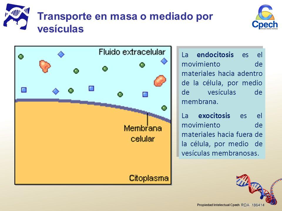 Propiedad Intelectual Cpech La endocitosis es el movimiento de materiales hacia adentro de la célula, por medio de vesículas de membrana.