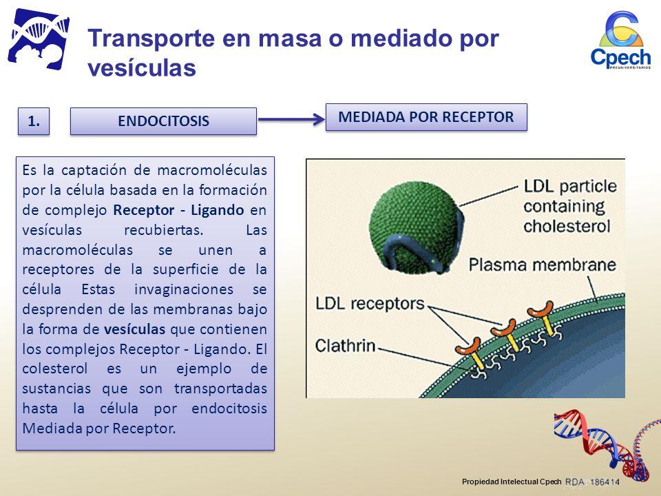 Propiedad Intelectual Cpech MEDIADA POR RECEPTOR 1.