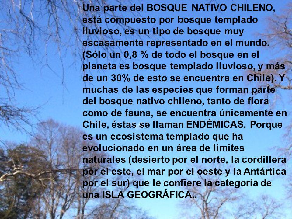 Una parte del BOSQUE NATIVO CHILENO, está compuesto por bosque templado lluvioso, es un tipo de bosque muy escasamente representado en el mundo. (Sólo