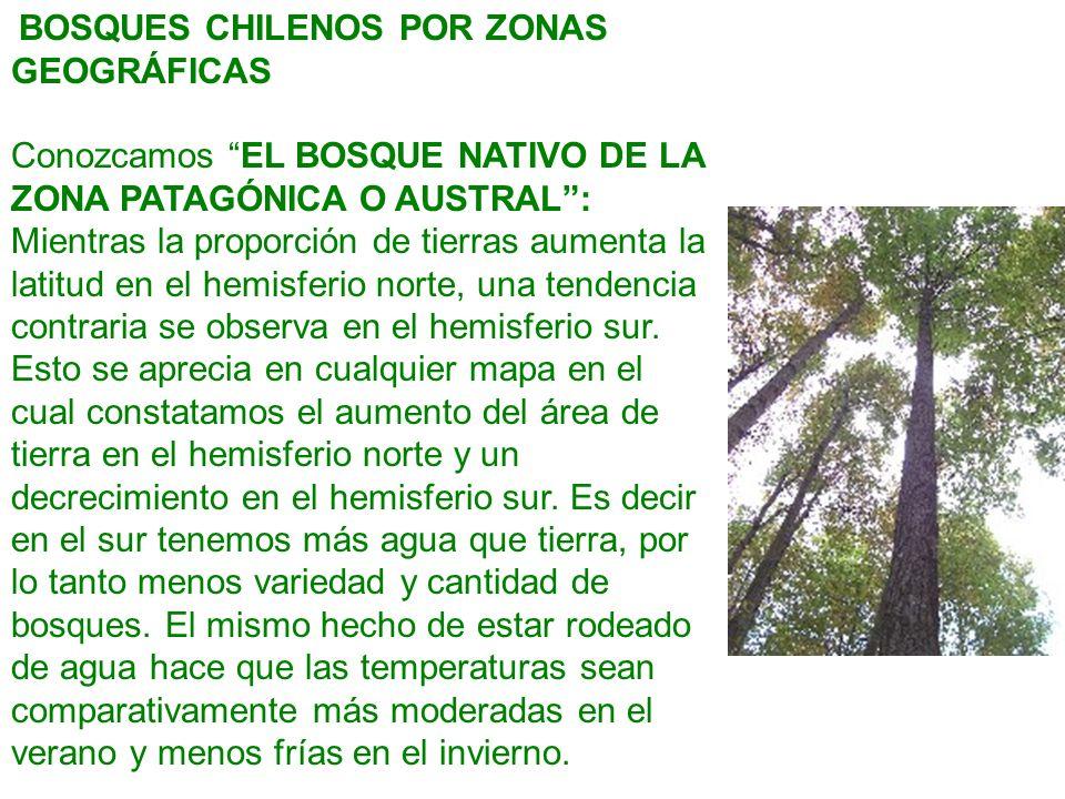 BOSQUES CHILENOS POR ZONAS GEOGRÁFICAS Conozcamos EL BOSQUE NATIVO DE LA ZONA PATAGÓNICA O AUSTRAL: Mientras la proporción de tierras aumenta la latit