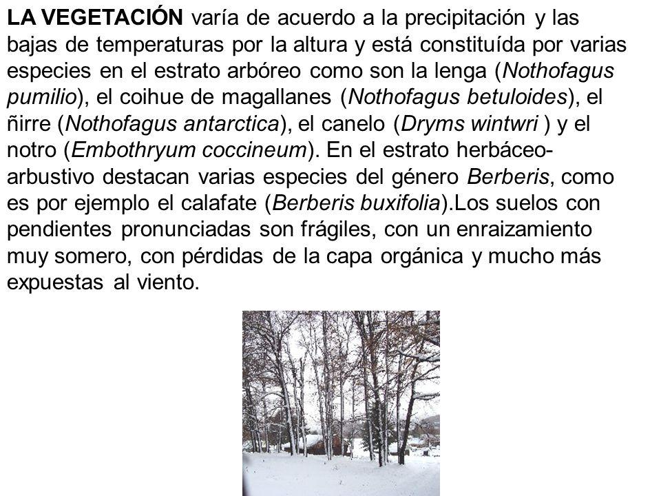 LA VEGETACIÓN varía de acuerdo a la precipitación y las bajas de temperaturas por la altura y está constituída por varias especies en el estrato arbór