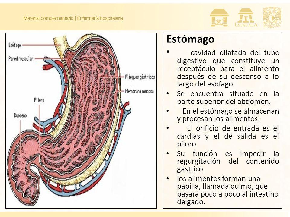 Estómago cavidad dilatada del tubo digestivo que constituye un receptáculo para el alimento después de su descenso a lo largo del esófago. Se encuentr