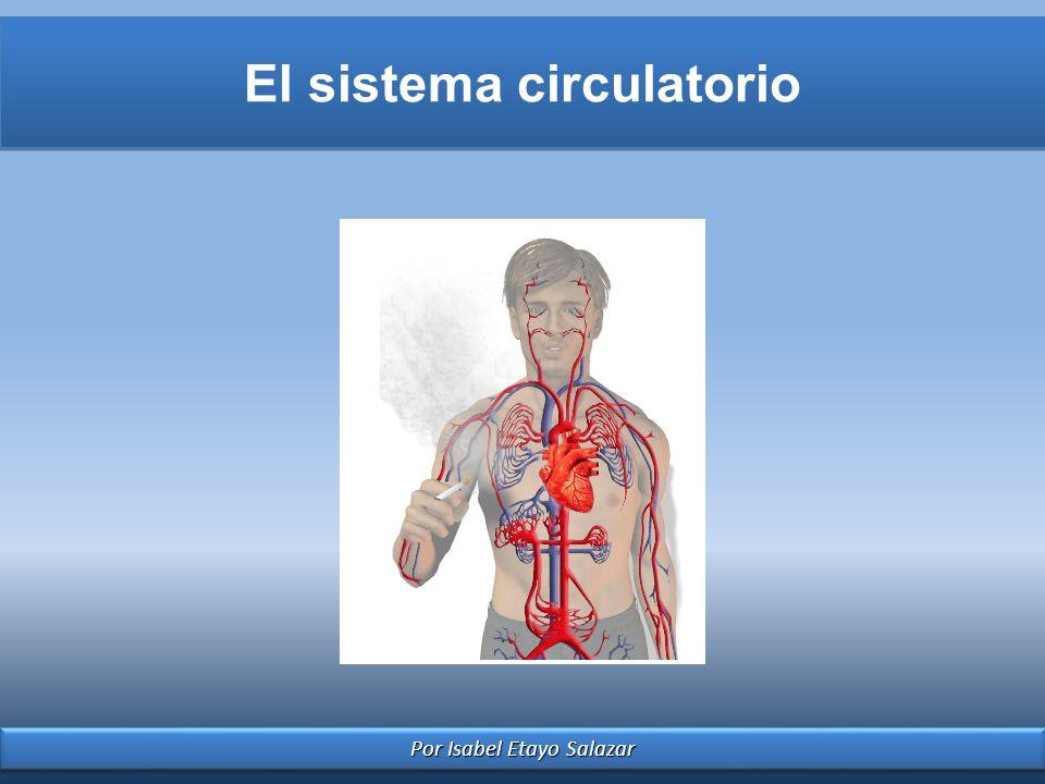 Por Isabel Etayo Salazar El sistema circulatorio