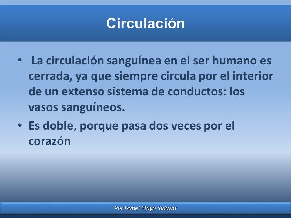 Por Isabel Etayo Salazar Circulación La circulación sanguínea en el ser humano es cerrada, ya que siempre circula por el interior de un extenso sistem